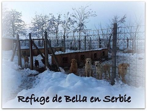 SERBIE - Refuge Bella - Arrivée du 13 janvier 2019 Bella013