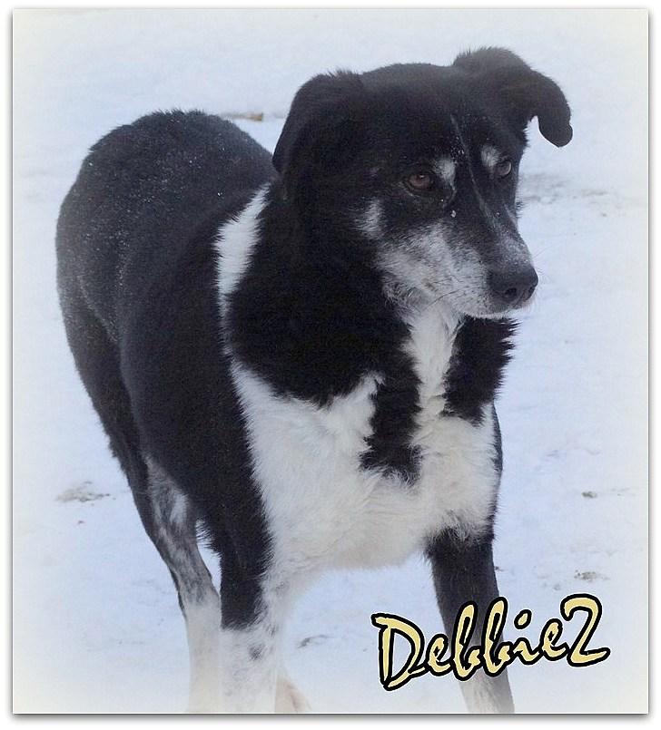 DEBBIE2, F-X, taille moyenne, née 2013 (PIATRA/PENSION) - Prise en charge VAC ANIMA Debbie10
