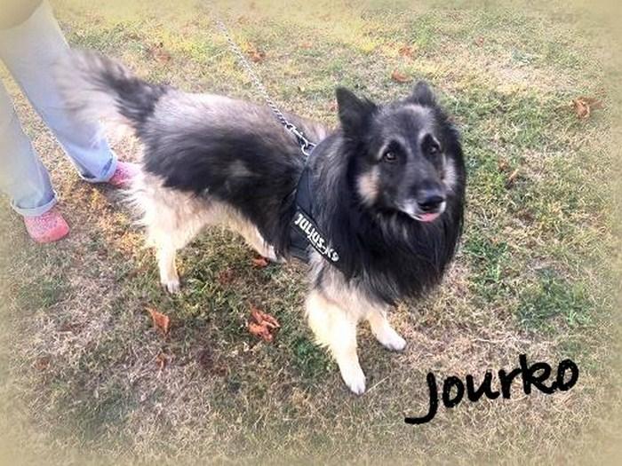 JOURKO, M-Type Tervueren, né avril 2014 (FRANCE) URGENT - En FA de transit chez Tania (Depart03) Jourko12