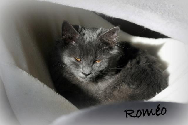 ROMÉO, M-Européen, né juin 2020 - En FA chez DomiLafon (Depart28) - Magnifique gris  Romeo_13