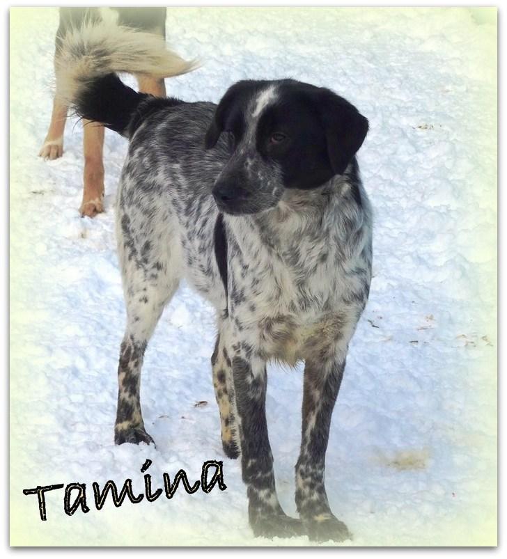 TAMINA, F-X, taille moyenne, née ??? (PIATRA/pension) un peu timide Tamina10