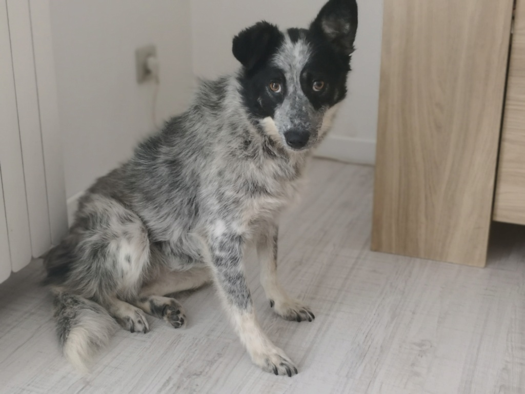 Tootsie - femelle - refuge de Târgu Frumos - adoptée Img_2028
