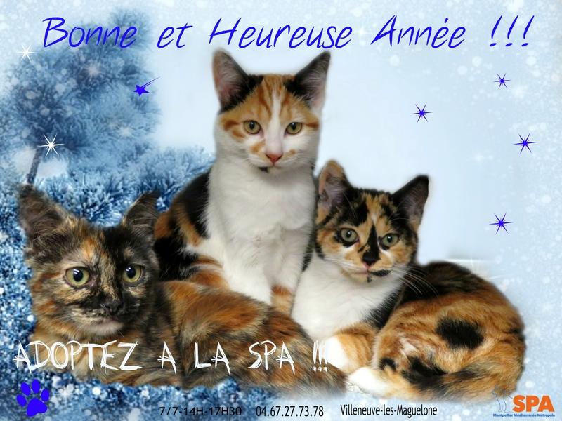 Spa Montpellier, adoption de chats et de chatons - Portail Affich10