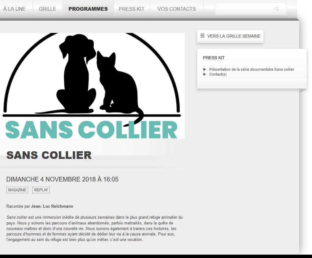 Spa Montpellier, adoption de chats et de chatons - Portail Annonc11
