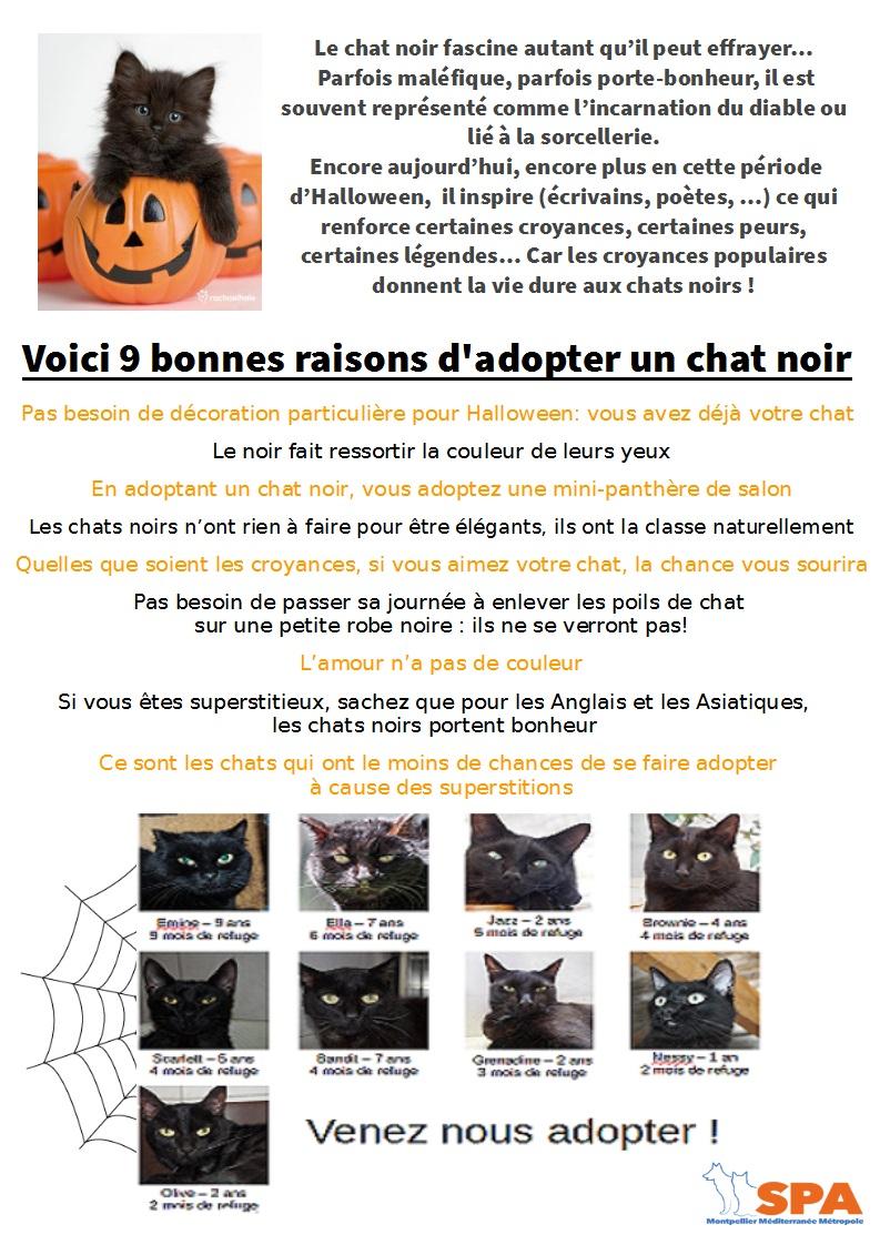Spa Montpellier, adoption de chats et de chatons - Portail Chats_10