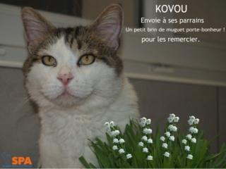 Spa Montpellier, adoption de chats et de chatons - Portail Kovou_10