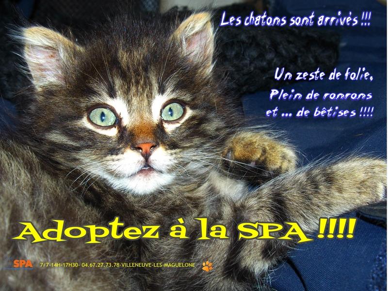 Spa Montpellier, adoption de chats et de chatons - Portail Les_ch10
