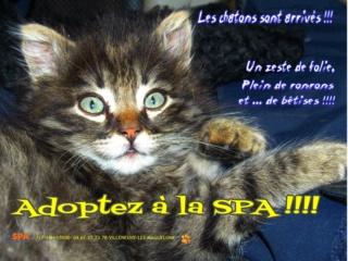 Spa Montpellier, adoption de chats et de chatons - Portail Les_ch11