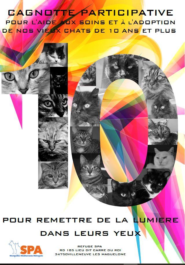 Spa Montpellier, adoption de chats et de chatons - Portail Vieux_10