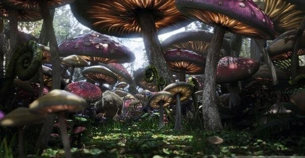Грибной лес Sa_a10