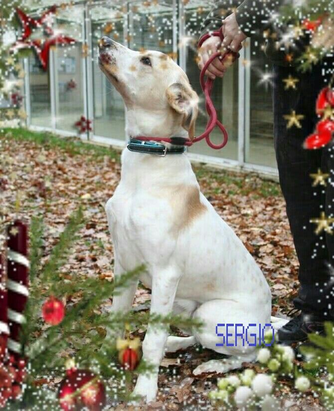 adoption de SERGIO 48429410