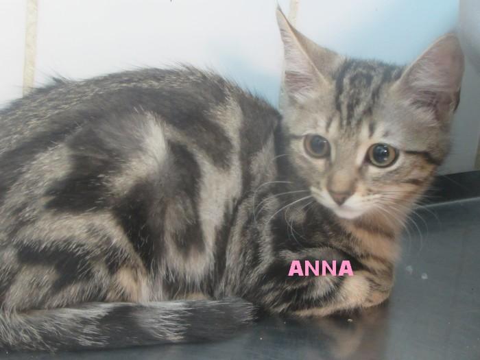 adoption de ANNA Anna_210