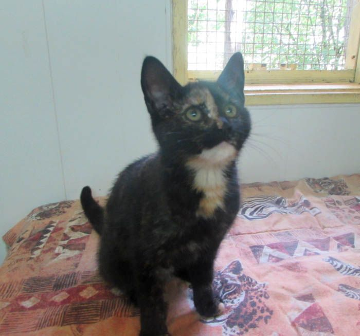 adoption de CHATAIGNE Chatai10