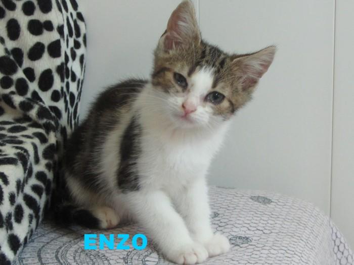 adoption de ENZO Enzo_210