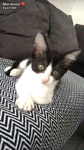 nouvelles d'OSCAR le chat Oscar110