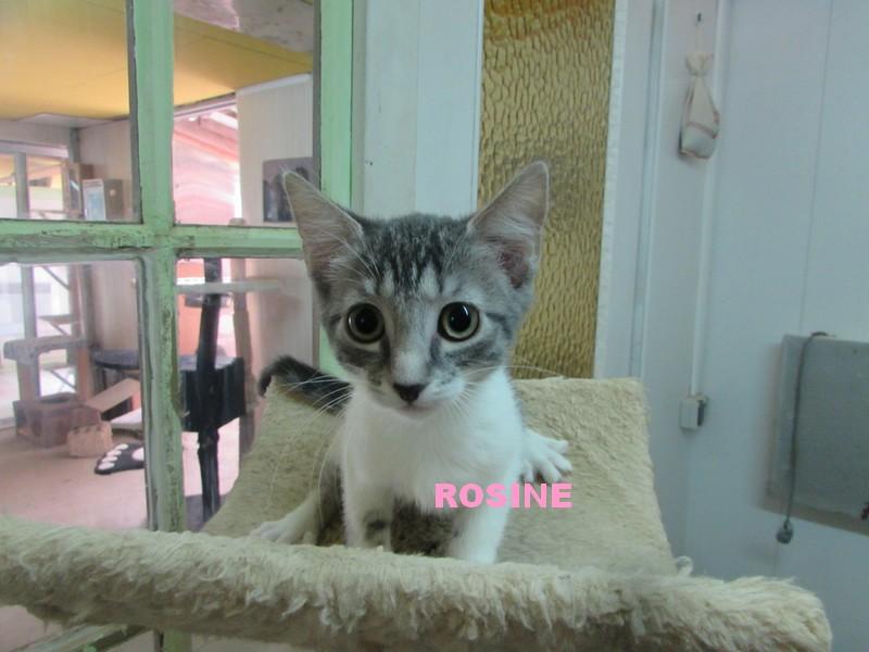 réservation de LINOU et ROSINE Rosine10