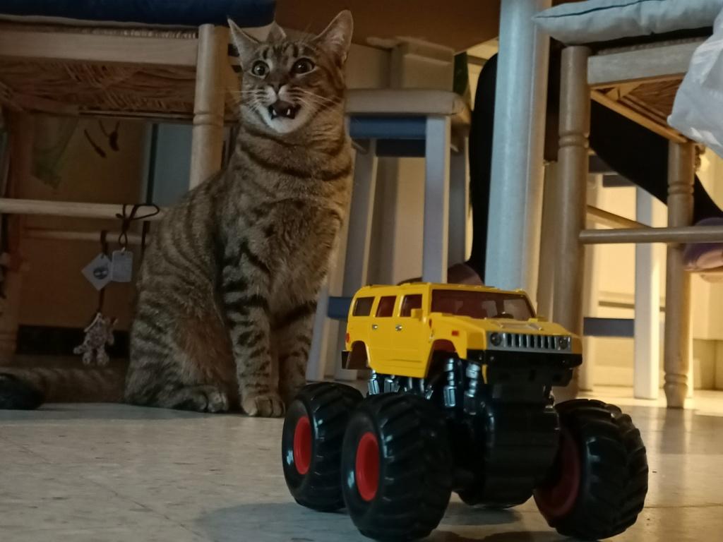 Photos de votre Hummer & animal de compagnie - Page 3 Img20210