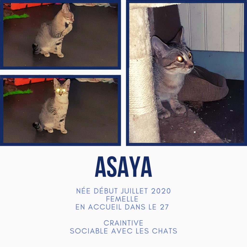 ASAYA - TIGREE (EN FA DANS LE 27) 20201012