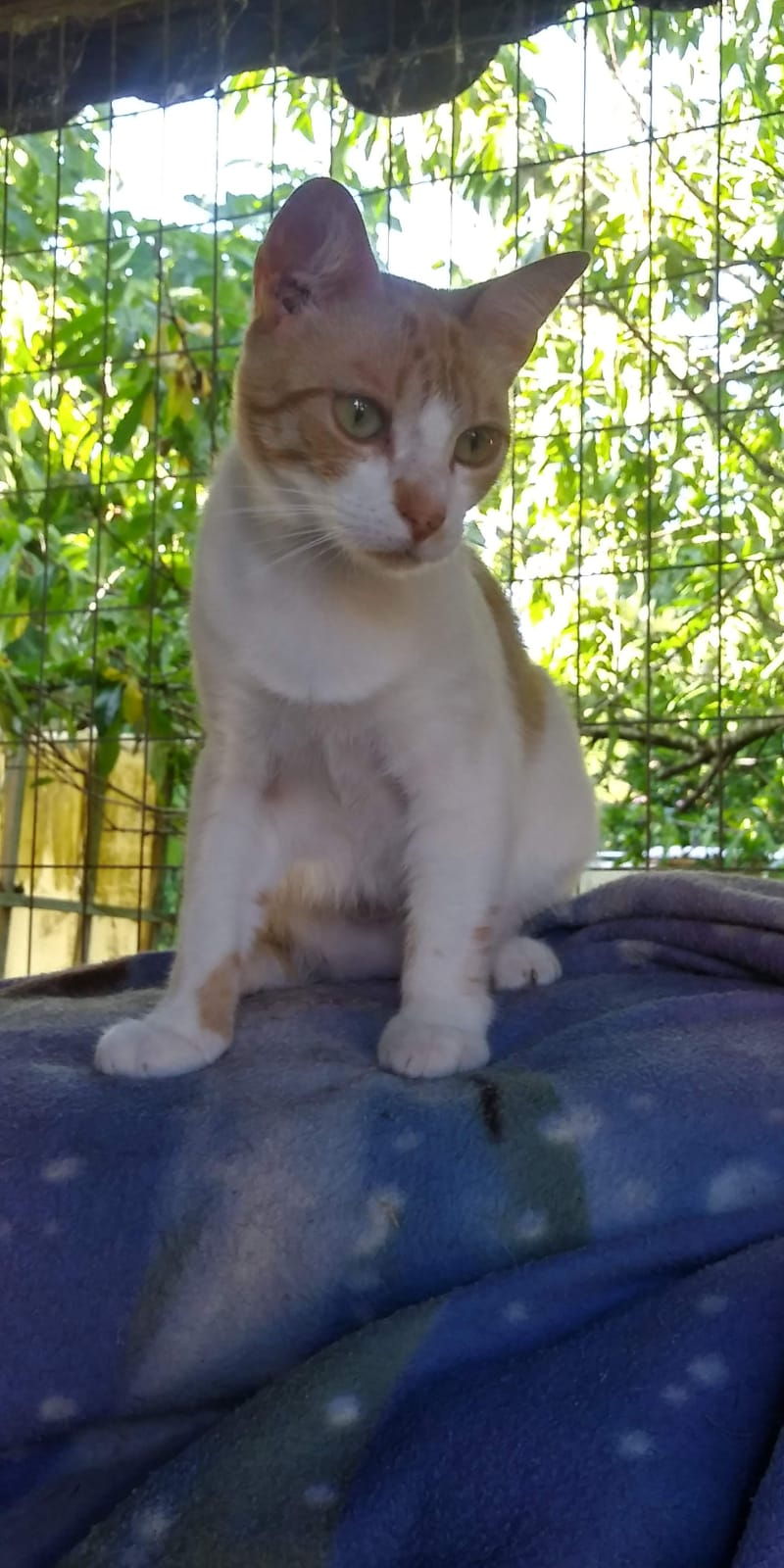 MADDIE- ROUSSE ET BLANCHE (BQG)  Img-1390