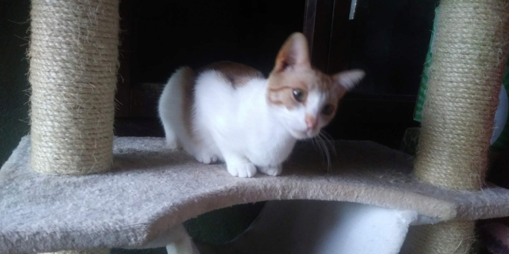 MADDIE- ROUSSE ET BLANCHE (BQG)  Img-1393