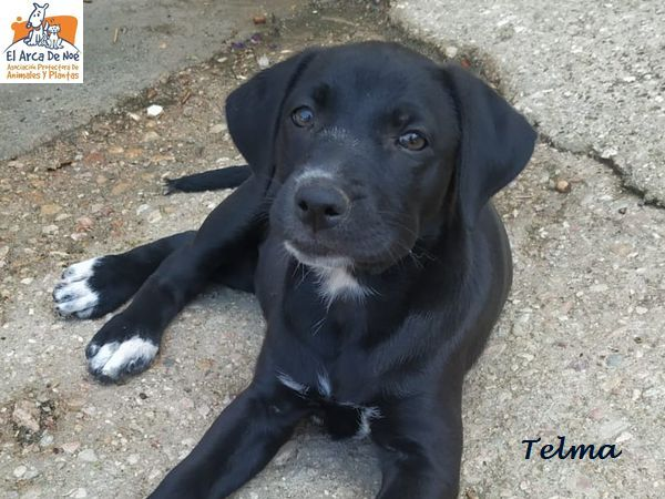 TELMA - CROISEE (ARCA) P2006118