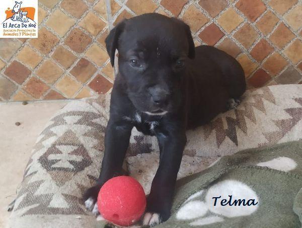 TELMA - CROISEE (ARCA) P2006121