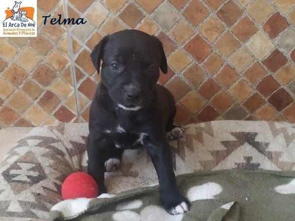 TELMA - CROISEE (ARCA) P2006122