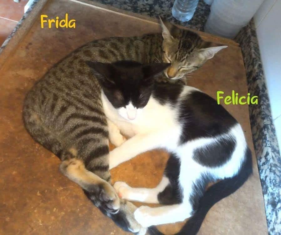 FRIDA- TIGREE (ARCA)  Recei111