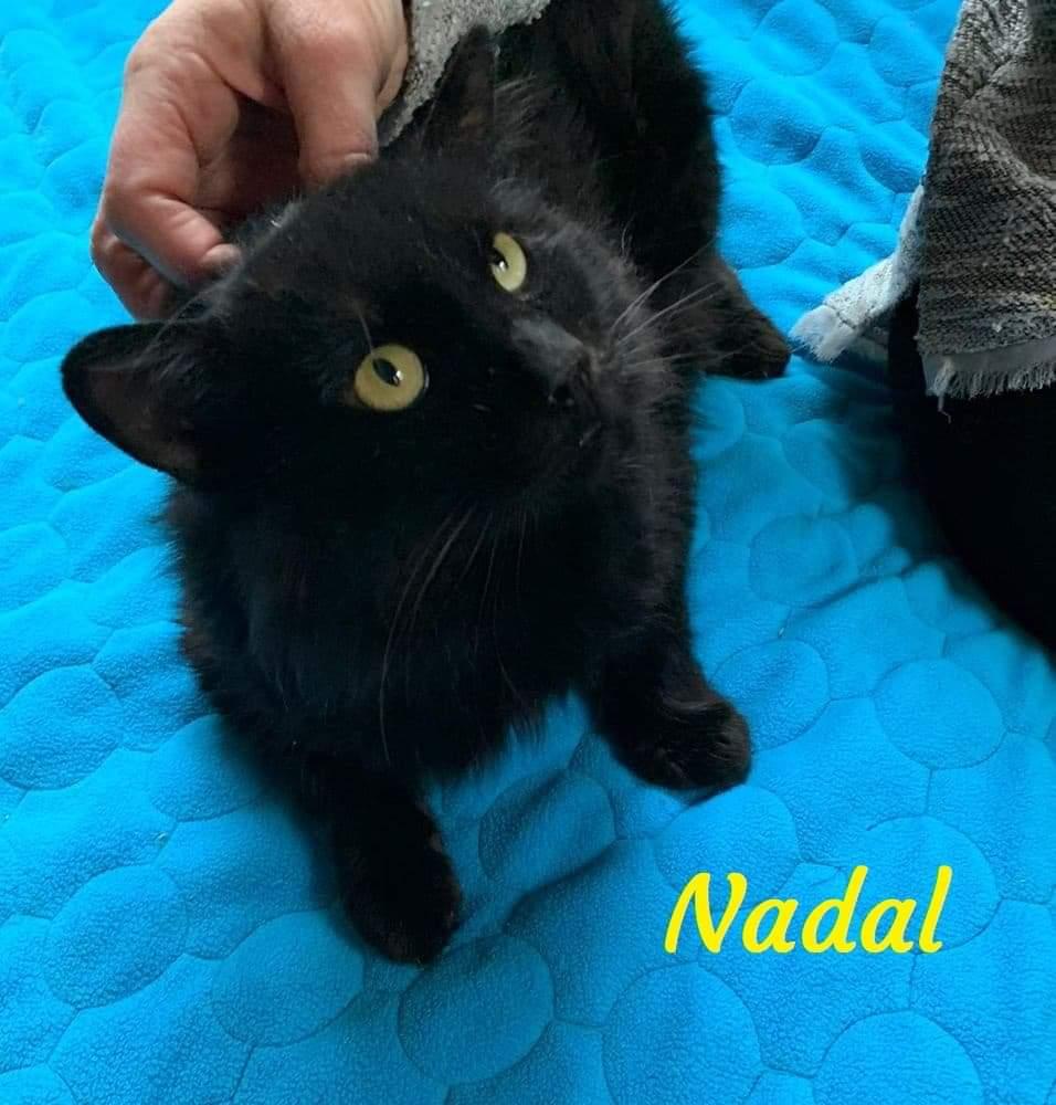 NADAL- NOIR POILS MI LONG (ARCA)  Receiv18