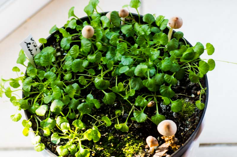 potée mixte avec champignons, j'adore !  Viola_13