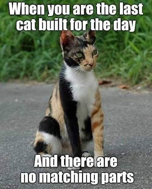 Cat Pictures Cat_la10