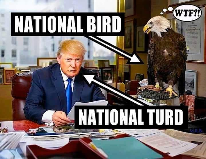 Donald Trump Vent Thread - Page 7 Nation10