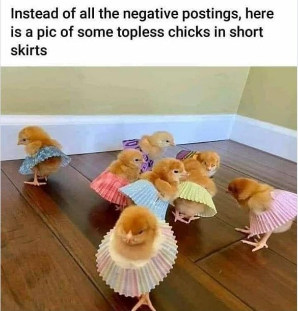 The Picture Jokes thread - Page 19 Toples10