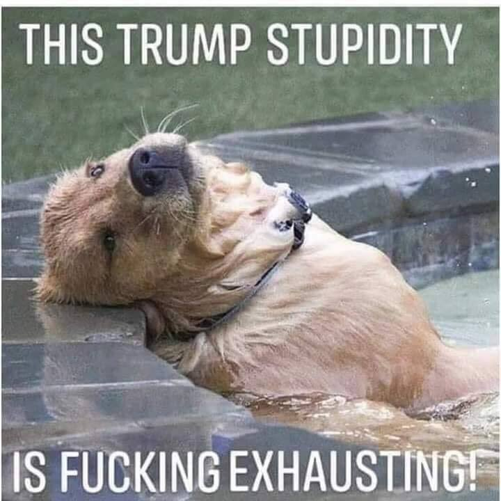 Donald Trump Vent Thread - Page 20 Trump682