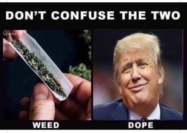Donald Trump Vent Thread - Page 17 Weed_v10
