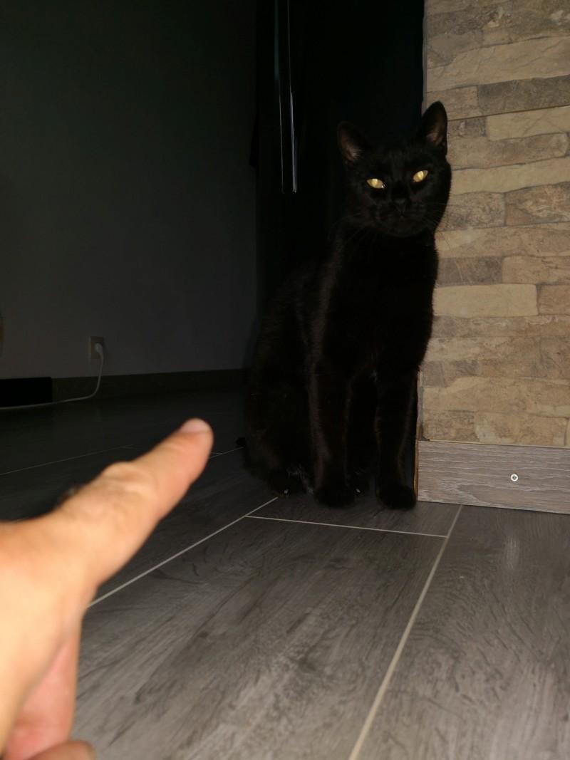 Batman, le chat noir au mauvais caractère 20180911