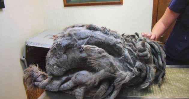 Un refuge sauve un chat abandonné dans un état effroyable Bob-ch10