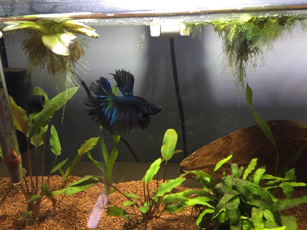 Mâle HM Black Orchid, MrAlti Img_6310