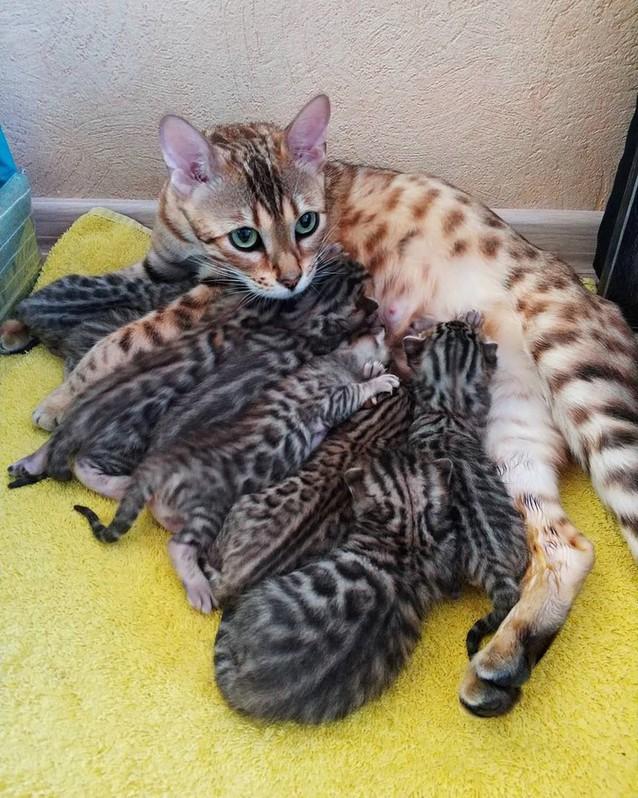 Pour les amoureux des chats Chats10