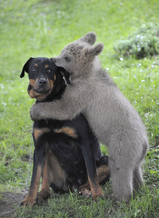 De belles images d'amitié - Page 3 Dc111