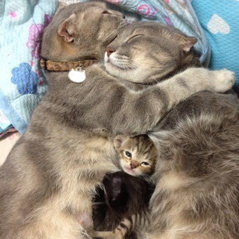 Pour les amoureux des chats Dc39
