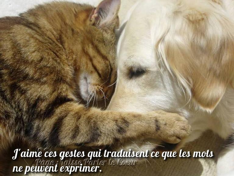 De belles images d'amitié - Page 3 Dc_ami10