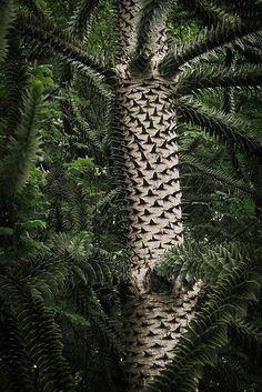 Hommages aux arbres - Page 5 Dc_arb11