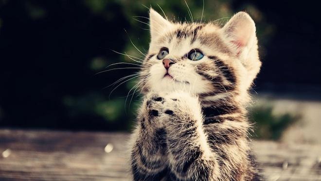 Pour les amoureux des chats Dc_cha10