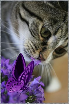 Pour les amoureux des chats - Page 2 Dc_cha12