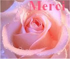 La rose Merci_11