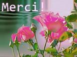 Une Rose épanouie Merci_24