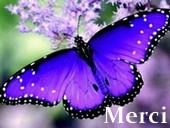 superbes papillons! Merci_25