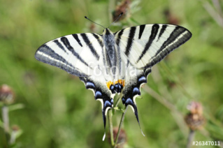 superbes papillons! - Page 2 Mp11