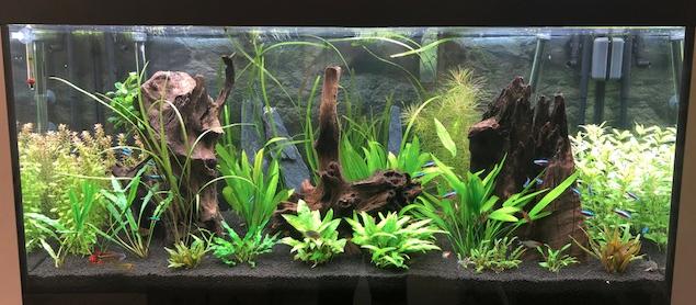 Aquarium juwel rio 300 - Page 3 Captur13